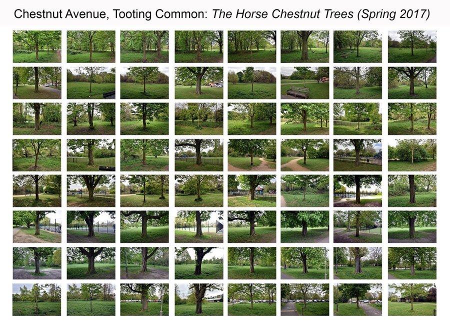 chestnut avenue spring all trees